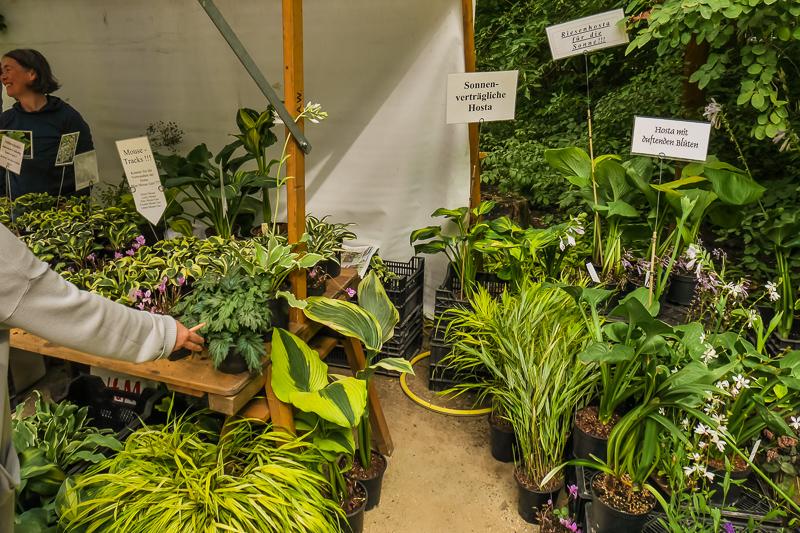 Gartenbau Thomas Ahrens auf dem Berliner Staudenmarkt