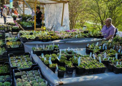 Alpenplantenkwekerij Cathy Portier