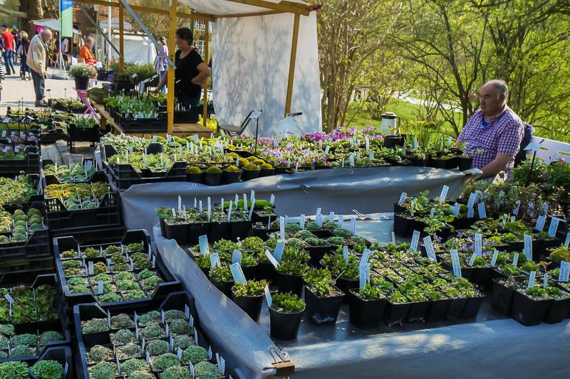 Alpenplantenkwekerij Cathy Portier auf dem Berliner Staudenmarkt