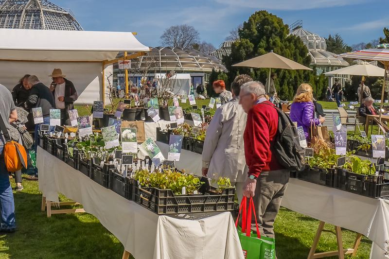 Gärtnerei Blütenreich auf dem Berliner Staudenmarkt