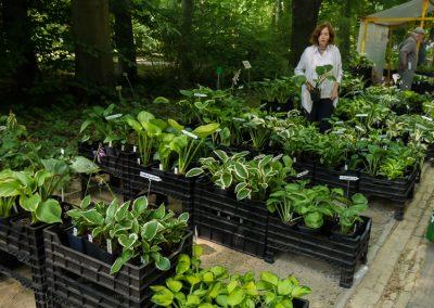 Hosta & Pflanzen für Licht und Schatten – Dr. Ullrich Fischer