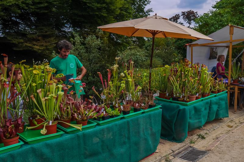 Fleischfressende Pflanzen Berlin auf dem Berliner Staudenmarkt