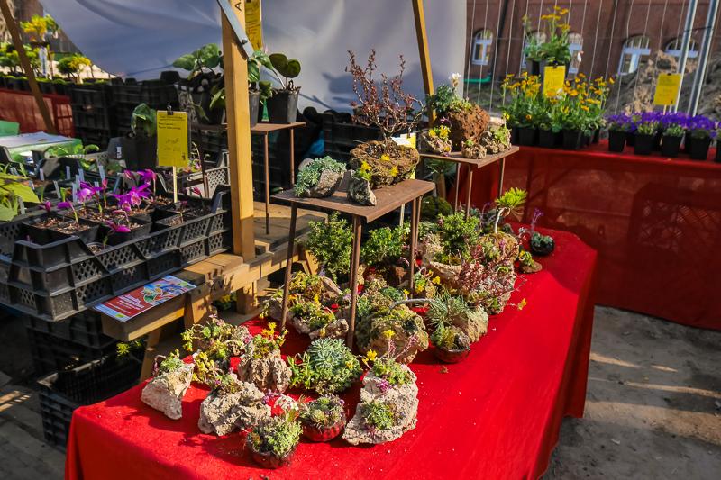 Gartenbau M. Härtl auf dem Berliner Staudenmarkt
