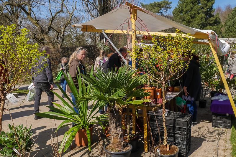 Gartenpflege Hanetzog auf dem Berliner Staudenmarkt