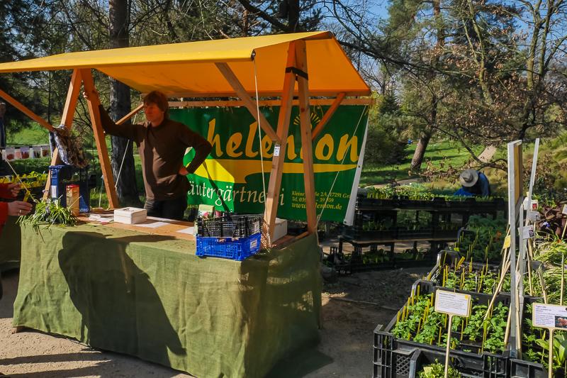 Kräutergärtnerei helenion auf dem Berliner Staudenmarkt