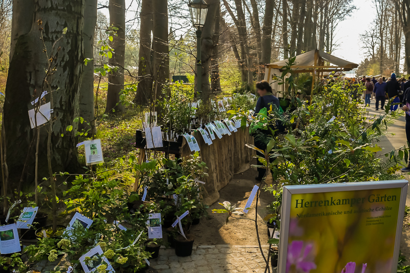 Herrenkamper Gärten auf dem Berliner Staudenmarkt