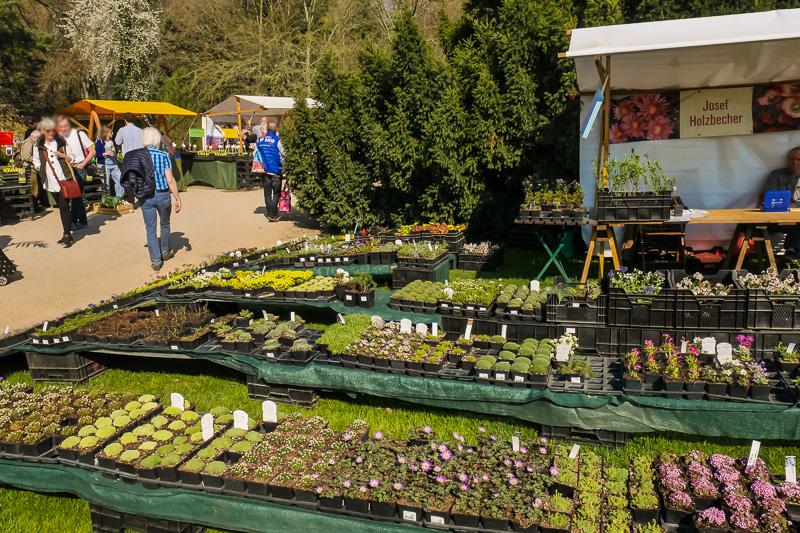 Botanische Gärtnerei Holzbecherova auf dem Berliner Staudenmarkt