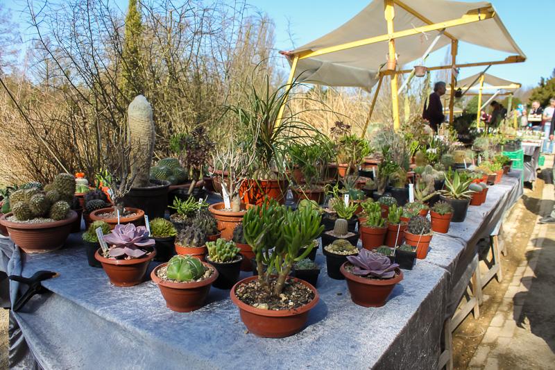 Kaktusgarten auf dem Berliner Staudenmarkt