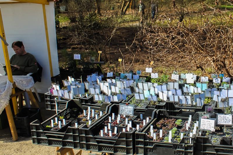 Kilians Pflanzenkulturen auf dem Berliner Staudenmarkt