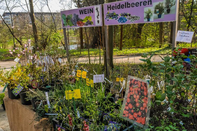 Baumschule Karsten Kirschner auf dem Berliner Staudenmarkt