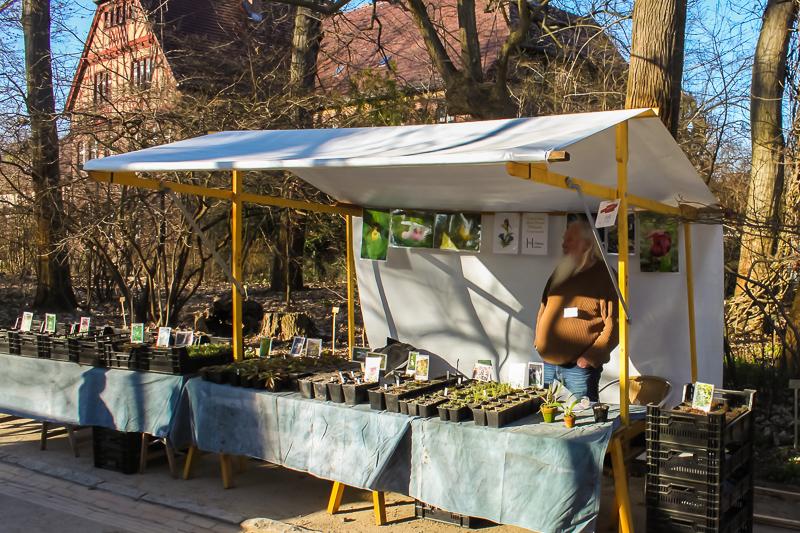 Freilandorchideen, Wildstauden Wolfgang Mowwe auf dem Berliner Staudenmarkt