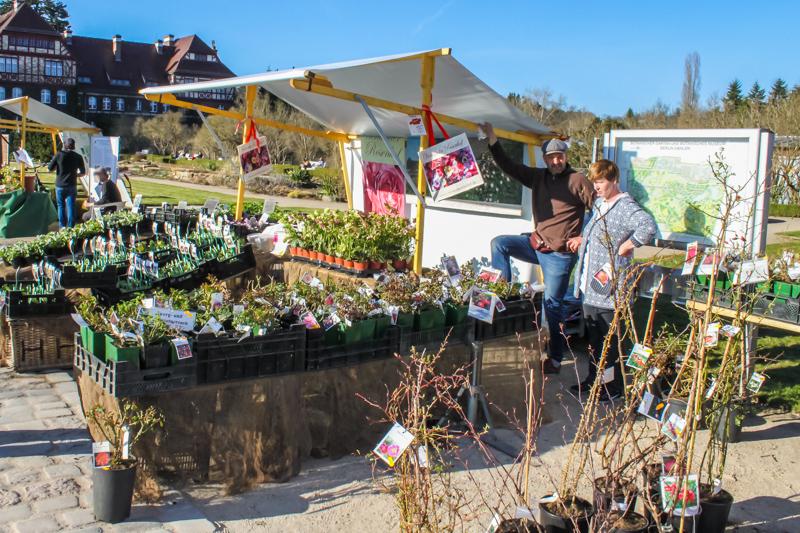 Der Vierländer Rosenhof auf dem Berliner Staudenmarkt